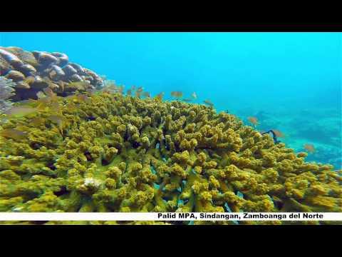 Sindangan Marine Protected Area (@Brgy.PALID)
