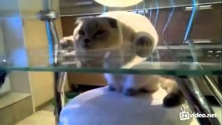 Позитивный кот не отходит от хозяина.