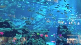 Гигантский аквариум в Дубай Молл(Видео предоставлено сайтом http://worldwidetours.ru/ Поддержите нас, нажмите