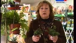 Рассказ о комнатных растениях. Как ухаживать, сажать и т.п.