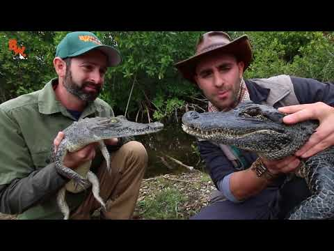 Вопрос: Чём болеют крокодилы?