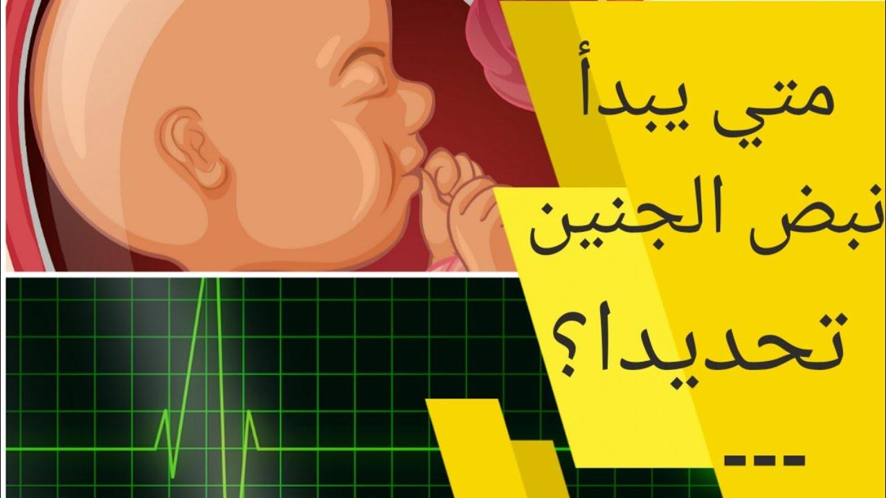 في اي اسبوع يبدا نبض الجنين تحديدا متي يبدأ نبض الجنين داخل الرحم في اي شهر ينبض قلب الجنين Youtube