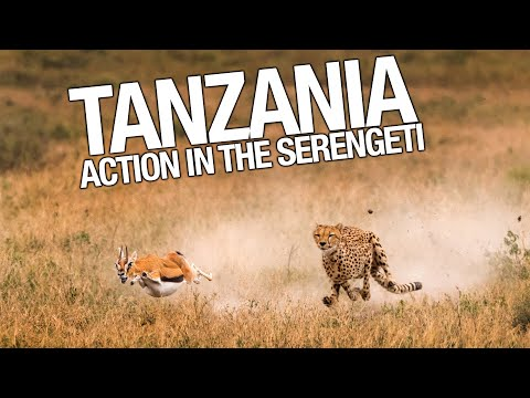 Tanzania Wildlife Safari - Air and Land