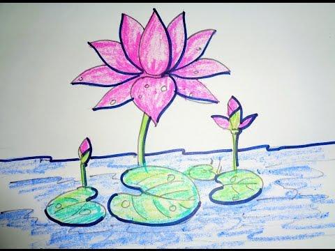 Shapla flower draw