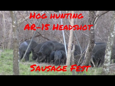 Hog Hunting with AR-15 – Sausage Fest Headshot