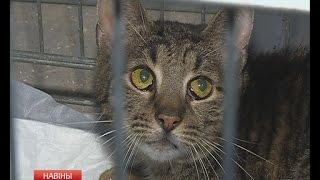 Бездомные животные ищут теплый дом