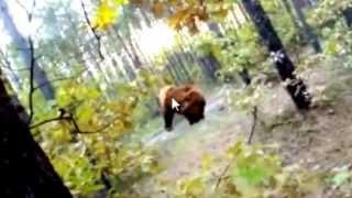 Почему ролик с медведем и велосипедистом - фейк
