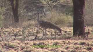 85 Ethiopian Birds - 85 የኢትዮጵያ ወፍ ዝርያዎች