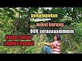 Ooo Seraaaaammmm Mikat Burung Dalam Hutan Angker Banget Suku Mante Bunian  Mp3 - Mp4 Download