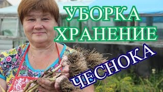 Советы по Уборке и Хранению Чеснока. (27.07.16)