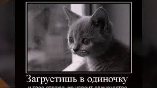 Грустное видео про кота до слёз 😢😢😢😭😭
