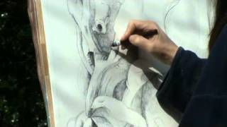 Drawing an ancient birch tree - Julia Sorrell Drawing in Foxley wood, Norfolk Part II