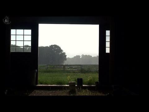 🎧 Farm Ambient Sounds With Birds, Cattle & Rain On A Barn Roof, Country Ambience For Relaxation
