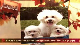 Puppy Potty Training Tips | Yorkie Puppy Training Tips | Tips For House Training A Puppy | Crate