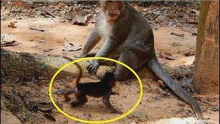 monkey do bad on baby