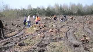 Sadzenie lasu - IIIa