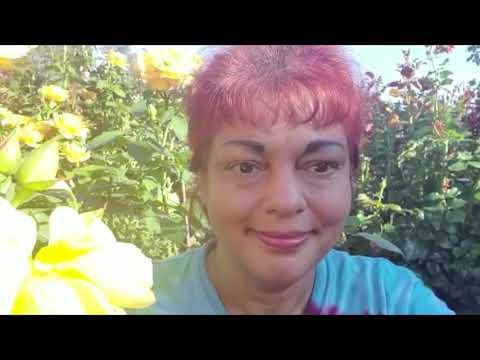 Universal Prayer for Peace Series - Sharon Makhmour
