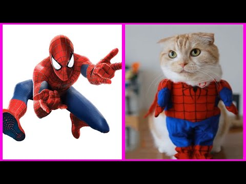 Superheroes Characters As Cats | ROY ROY