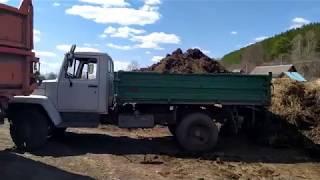 Вывозим навоз на ГАЗ 3307 и МТЗ 82