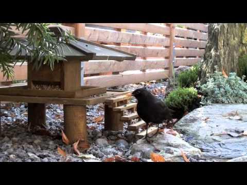 japanisches vogelhaus youtube. Black Bedroom Furniture Sets. Home Design Ideas