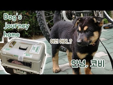 a-dog's-journey-home---how-kobe-went-from-south-korea-to-the-us!
