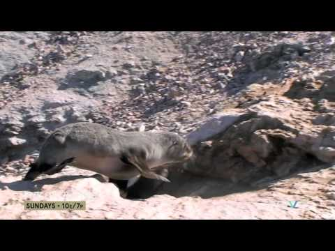 The Seals of Namibia ('The Operatives' - S1, Episode 1 Clip)
