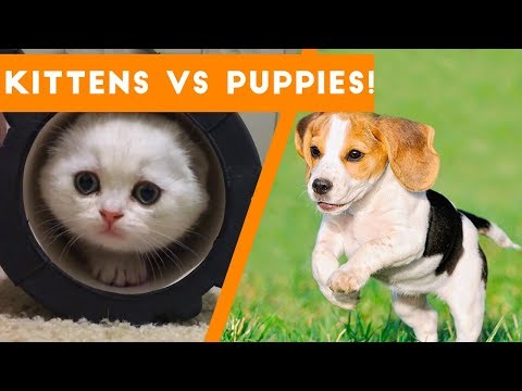 Try Not to AWW! at These Cute Kittens and Funny Puppies  Funny Pet s