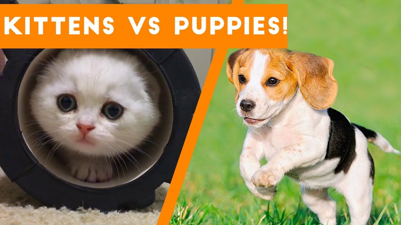Try Not to AWW at These Cute Kittens and Funny Puppies