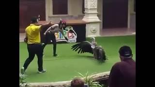 Пхукет. Таиланд. Июнь 2017. Шоу птиц на Пхукете в парке птиц.