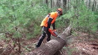 Cutting timber on Biltmore Estate thumbnail