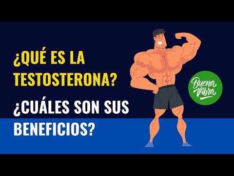 la testosterona es producida por la glándula prostática