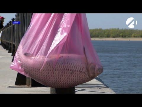 Запрет на ловлю рыбы вне населённых пунктов с 20 апреля до 20 июня
