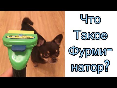 Фурминатор против линьки у собак!