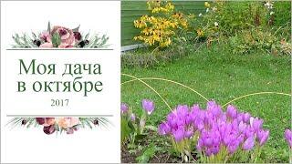 видео Работы в саду и огороде в сентябре, октябре и ноябре