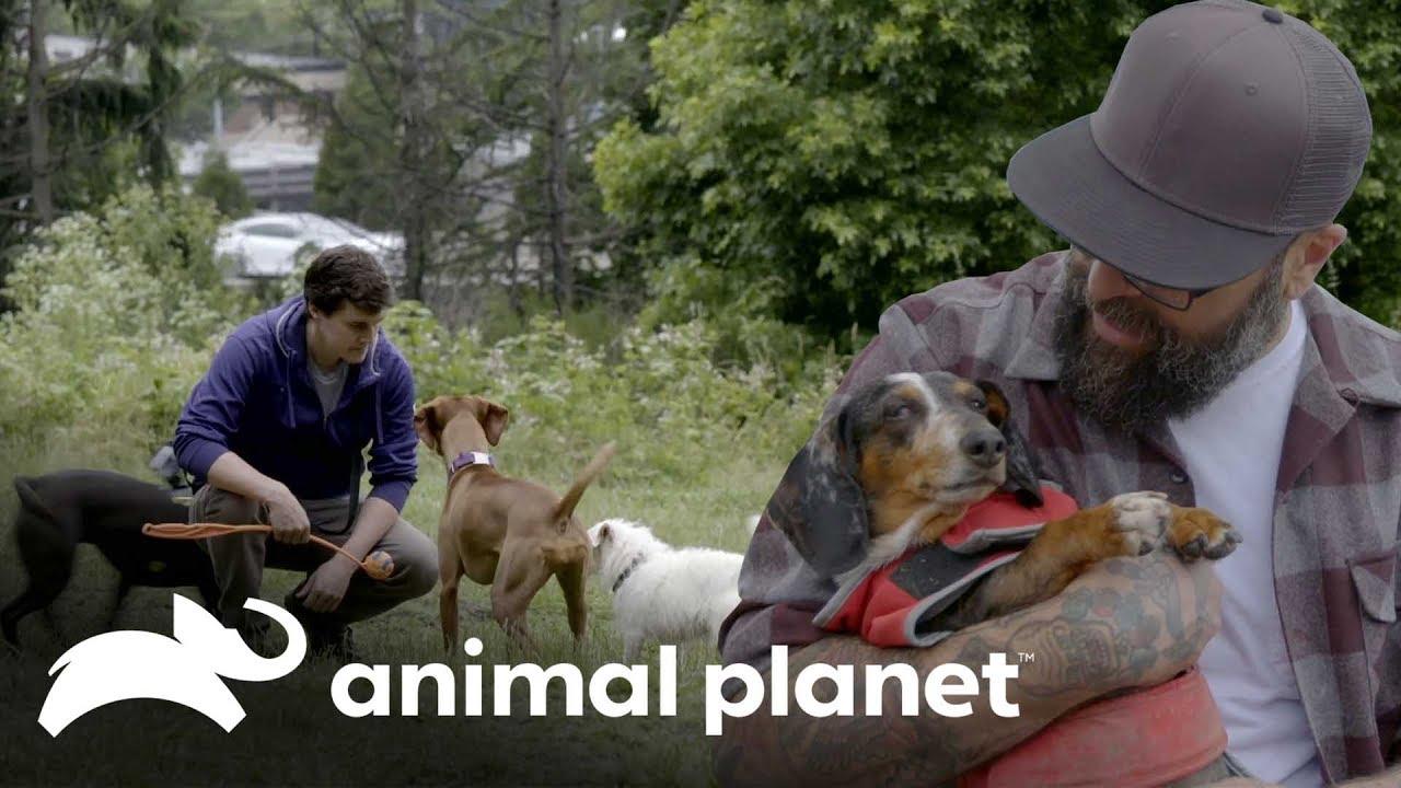 A importância dos parques para os cachorros | Um Lar para Pets | Animal Planet Brasil