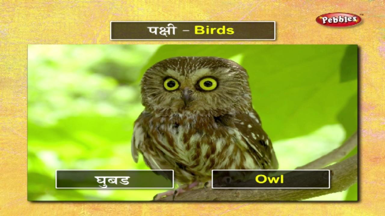 Learn Birds In Marathi मर ठ श क य Learn Marathi Through English Learn Marathi Grammar Youtube