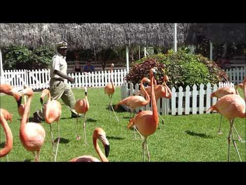Visit Ardastra Gardens & Zoo in Nassau, Bahamas!
