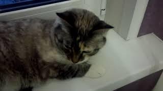 Скажите что кошка милая (красотка)!
