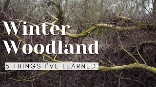 Learning Woodland Photography- Start of a Journey