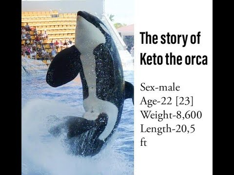 The Story of Keto the Orca