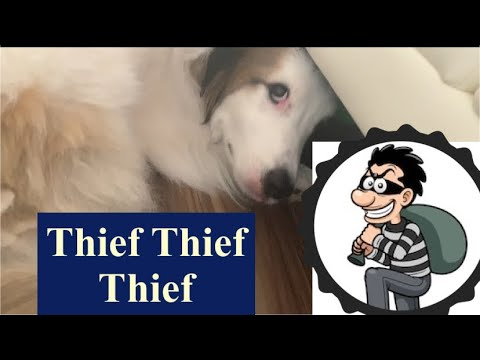 Funny dog think there is a thief