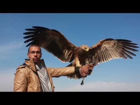 Imperial Eagle Training - Slow motion