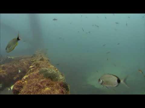 Sharks in the Atlantic Cam 05-21-2017 05:00:10 - 05:43:02