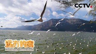 《远方的家》 20190919 长江行(31) 金沙江南岸的高原明珠| CCTV中文国际