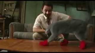 Прикол! Кот в варежках