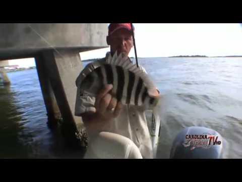 Carolina fishing tv swansboro sheepshead part ii youtube for Carolina fishing tv