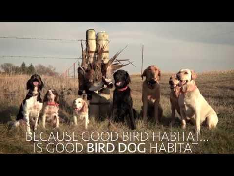 Bird Dogs For Habitat