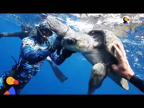Sea Turtle Wrapped In Trash Freed by Divers | The Dodo - WORLD TURTLE DAY