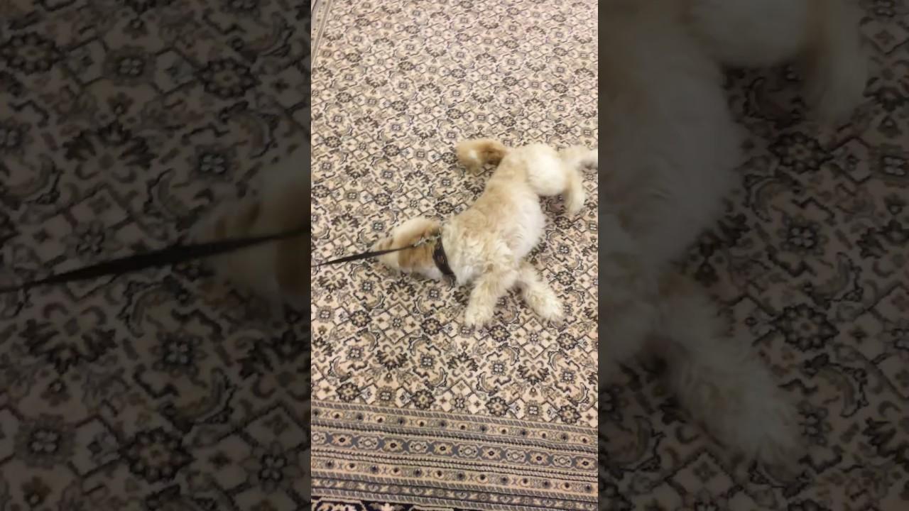 Wlzen bei teppich kibek youtube wlzen bei teppich kibek parisarafo Image collections