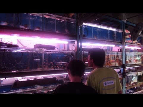Crazy Fish Store In Asia. Aquarium Shop In Vietnam!